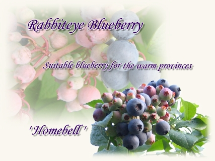 blueberry_homebell01