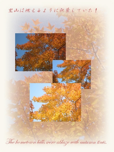 autumn_dead_leaves01.jpg